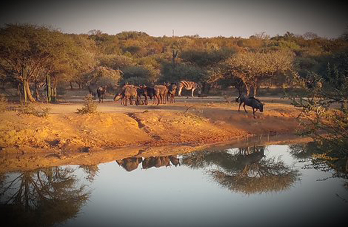 North-West Province, Brits: Dube Private Game Lodge