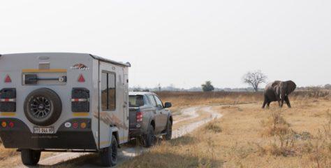 Botswana's Fallen Giant
