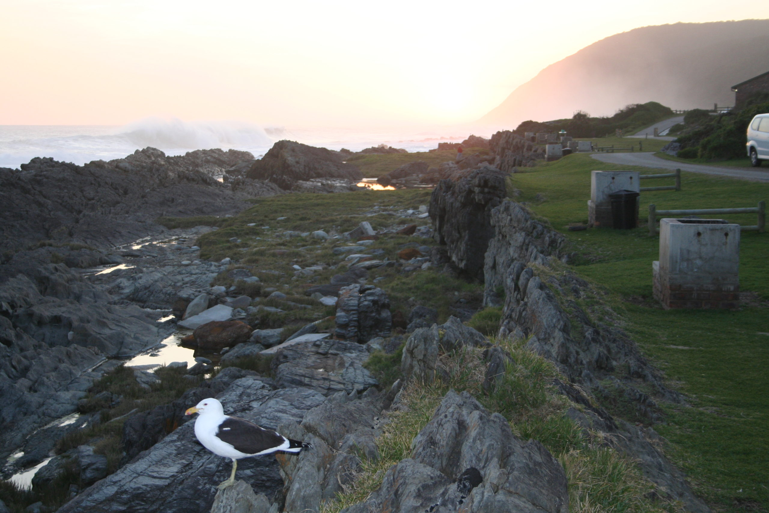 Camping site next to ocean with bird